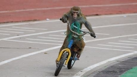 Road_safety_Orangutan_rides_bike